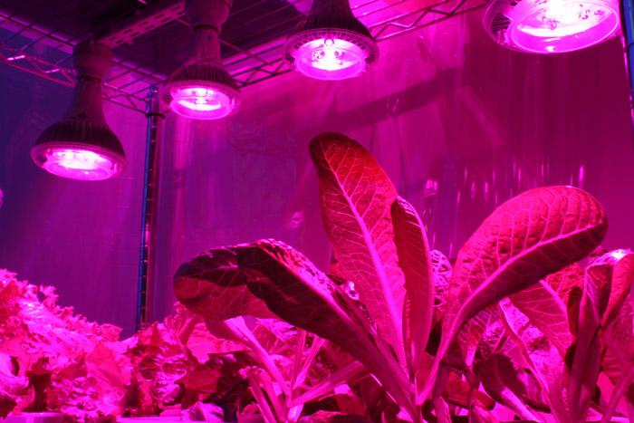 Фитолампа светодиодная для растений своими руками